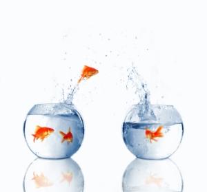 istock_fish-bowl-jumping